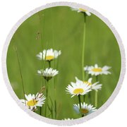 White Wild Flowers Nature Spring Scene Round Beach Towel