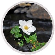 White Wild Rose In Big Thompson Canyon Round Beach Towel