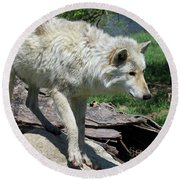 White Wolf 1 Round Beach Towel