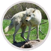 White Wolf 3 Round Beach Towel