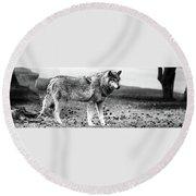 White Wolf Z Round Beach Towel