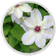 White, Yellow, And Purple Clematis Blossom Round Beach Towel