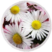 White Yellow Daisy Flowers Art Prints Pink Blossoms Round Beach Towel