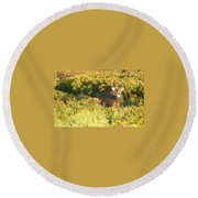 Whitetail Buck Round Beach Towel