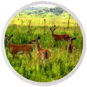 Whitetail Deer Family Round Beach Towel