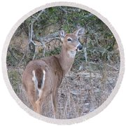 Whitetail Deer II Round Beach Towel
