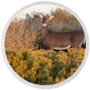 Whitetail Doe Round Beach Towel