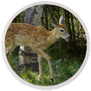 Whitetail Fawn Round Beach Towel
