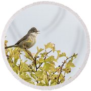 Whitethroat  Round Beach Towel