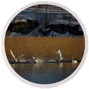 Whooper Swan Nr 12  Round Beach Towel