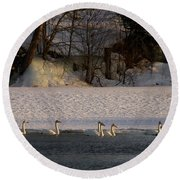 Whooper Swan Nr 14 Round Beach Towel