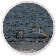 Whooper Swan Nr 2 Round Beach Towel