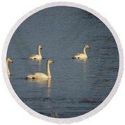 Whooper Swan Nr 8 Round Beach Towel