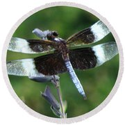 Widow Skimmer Dragonfly Round Beach Towel