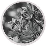 Wild Aster And Honey Bee Bw Round Beach Towel