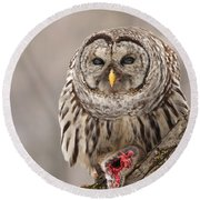 Wild Barred Owl With Prey Round Beach Towel