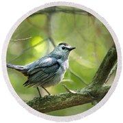 Wild Birds - Gray Catbird Round Beach Towel