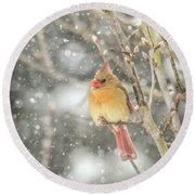 Wild Birds Of Winter - Female Cardinal In The Snow Round Beach Towel