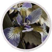 Wild Blue Iris Round Beach Towel