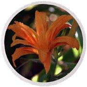 Wild Daylilies 1167 H_2 Round Beach Towel
