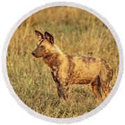 Wild Dog Of Botswana Round Beach Towel