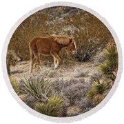 Wild Horse At Cold Creek Round Beach Towel