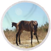 Wild Horses Desert Of Mexico Round Beach Towel