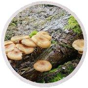 Wild Mushrooms 2 Round Beach Towel