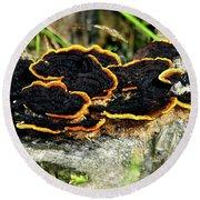 Wild Mushrooms Growing On Tree Trunk Round Beach Towel