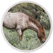 Wild Roan Stallion  Round Beach Towel