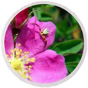 Wild Rose And The Spider Round Beach Towel