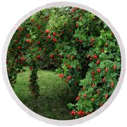 Wild Rosehips Round Beach Towel