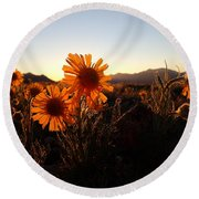 Wild Sunflowers Of Buena Vista Round Beach Towel