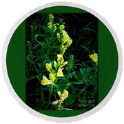 Wild Yellow Flowers On Black Background Round Beach Towel