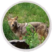 Wiley Coyote Round Beach Towel