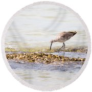 Willet Set 4 Of 4 By Darrell Hutto Round Beach Towel