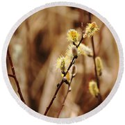 Willow Catkins Round Beach Towel