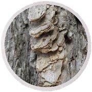 Willow Tree Bark Up Close Round Beach Towel