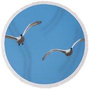 Trumpeter Swan Pair In Flight Round Beach Towel