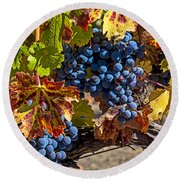 Wine Grapes Napa Valley Round Beach Towel