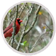 Winter Cardinal Sits On Tree Branch Round Beach Towel