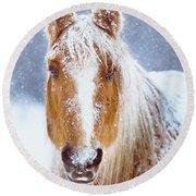 Winter Horse Portrait Round Beach Towel