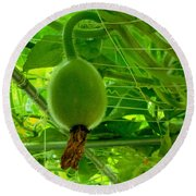 Winter Melon In Garden 3 Round Beach Towel