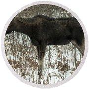 Winter Moose Round Beach Towel