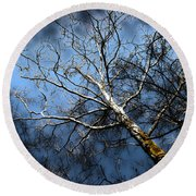 Winter Sycamore Round Beach Towel