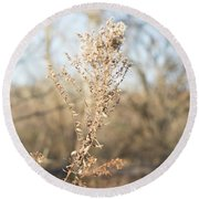 Winter Weeds Round Beach Towel