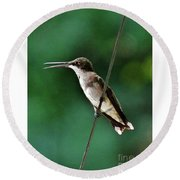 Wire Walker Young Male Ruby-throated Hummingbird    Round Beach Towel