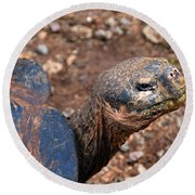 Wise Old Tortoise Round Beach Towel