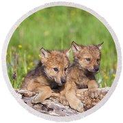 Wolf Cubs On Log Round Beach Towel