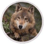 Wolf Face Round Beach Towel